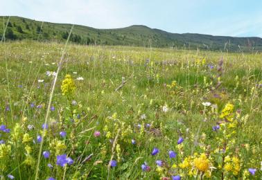 Almauftrieb sichert Biodiversität